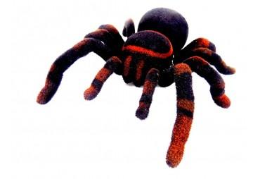 RC pavouk Tarantula